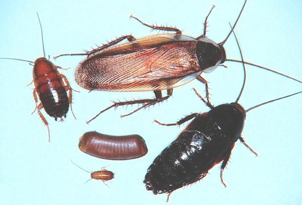 4 H Virtual Insect Collection